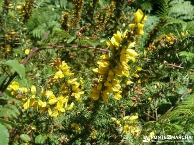 Parque Natural Gorbeia - Hayedo de Altube - Cascada de Gujuli;senderos en la palma de paseo por madr